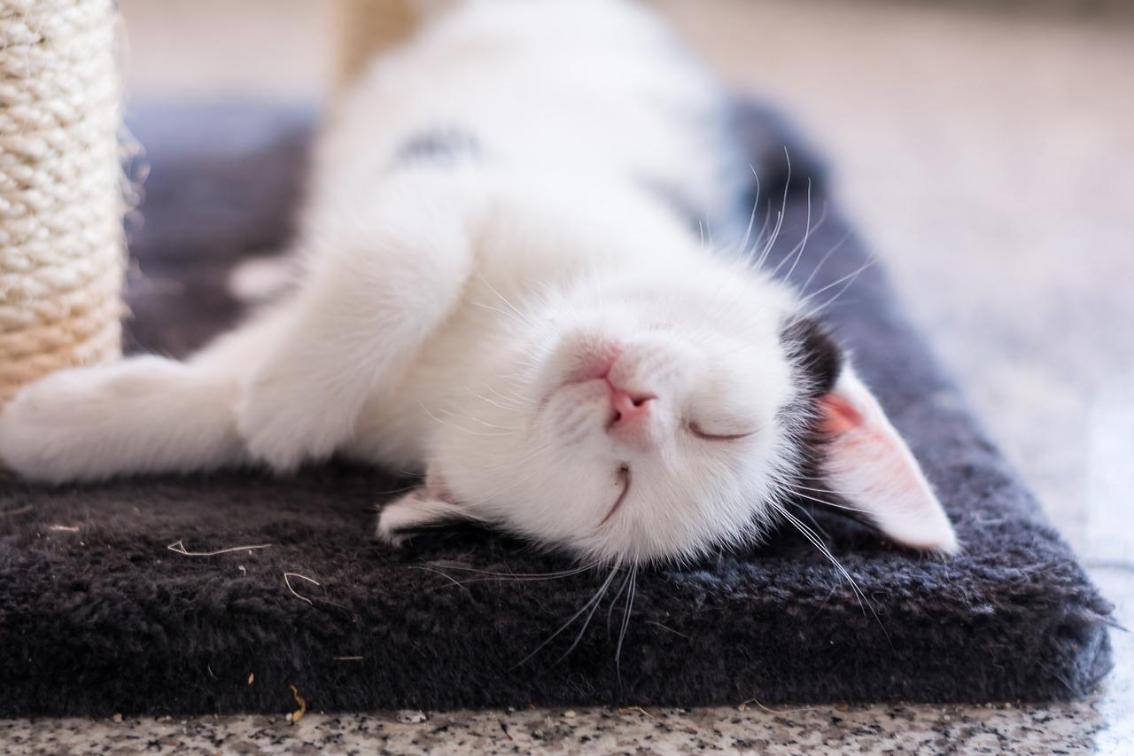 baby-cat-2119695_1280