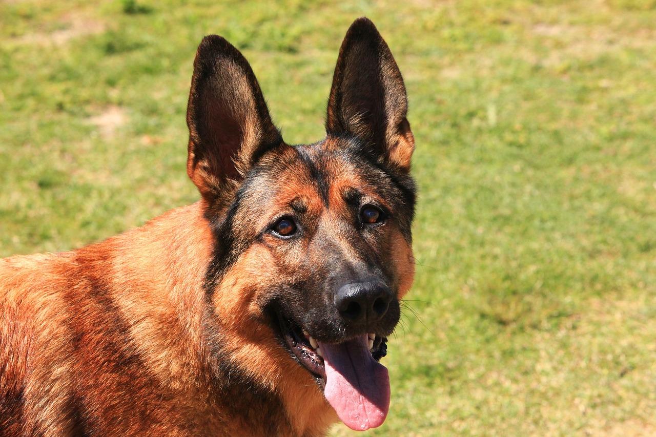 dog_pixabay